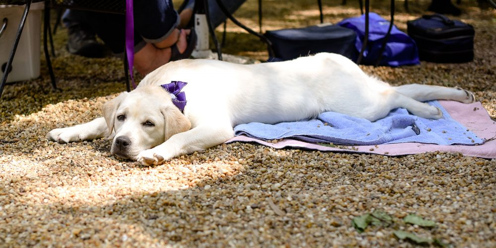 Dog relaxes at SOC 2019